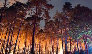 Hell erleuchtet ist ein brennender Wald nahe Klausdorf. Ein Feuer hat sich im Südwesten Brandenburgs auf einer großen Waldfläche ausgebreitet. (Foto)