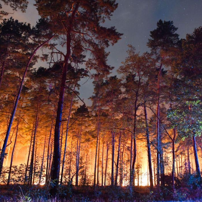 Großer Waldbrand hält Einsatzkräfte in Atem (Foto)