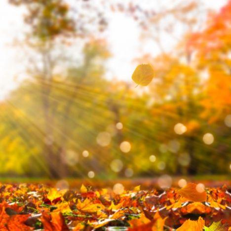 Bizarres El-Niño-Phänomen sorgt für Hitze-Herbst (Foto)