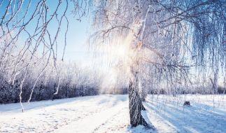 Erwartet uns ein strenger Winter? (Foto)