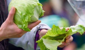 Lebensmittelrückruf von Eisbergsalat bei Edeka und Marktkauf. (Symbolbild) (Foto)