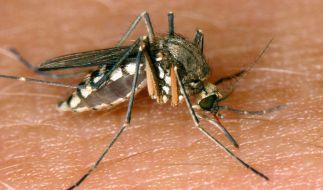 Das West-Nil-Fieber wird vor allem von Mücken übertragen. (Foto)