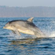 Not-OP! Deutsche beim Delfin-Schwimmen in Schiffsschraube gesogen (Foto)