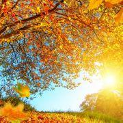 Goldener Herbst? Das sagte der 100-jährige Kalender voraus! (Foto)