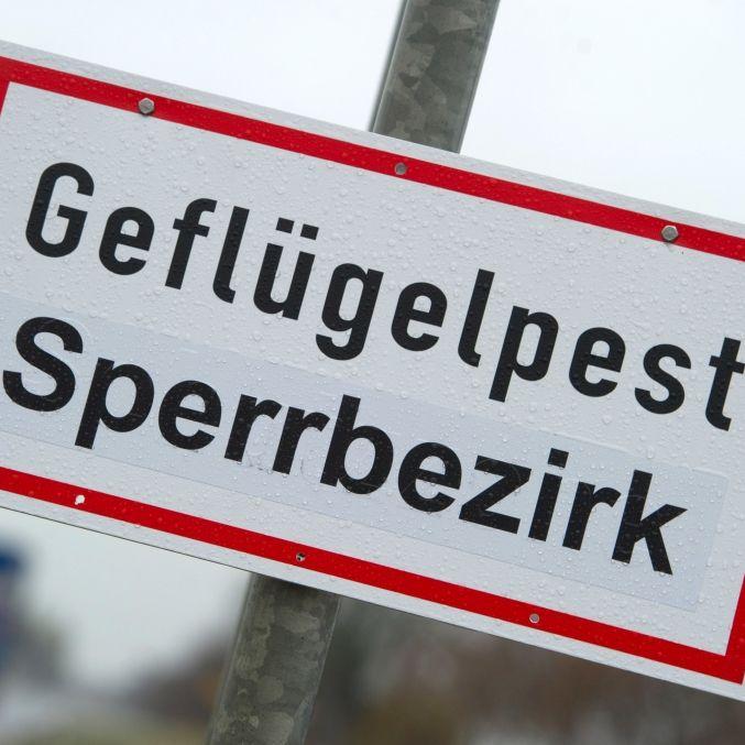 Experten warnen! So gefährlich ist dieGeflügelpest wirklich (Foto)