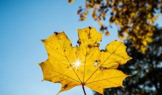 Verspricht der September 2018 einen Goldenen Herbst? (Foto)