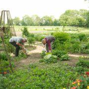 Die Ruwi Multiharke soll die Gartenarbeit wesentlich einfacher machen.