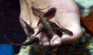 Der Besuch in einem Fisch-Spa in Thailand wurde einer Urlauberin aus Australien zum Verhängnis (Symbolfoto). (Foto)