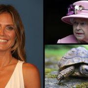 Heidi Klum: Jury-Schock bei GNTM // Queen Elisabeth II.: Treppensturz-Drama // Schildkröte in Vagina (Foto)