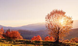 Können wir uns auf einen goldenen Oktober freuen? (Foto)