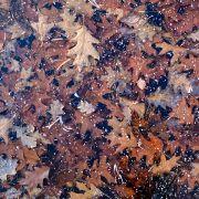 Ende September 2018 bringt das Herbst-Wetter laut Wettervorhersage den ersten Bodenfrost. (Foto)