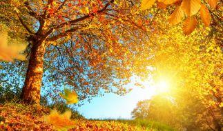 Zum Ende der Woche bescheren Temperaturen bis 25 Grad einen goldenen Oktober. (Foto)