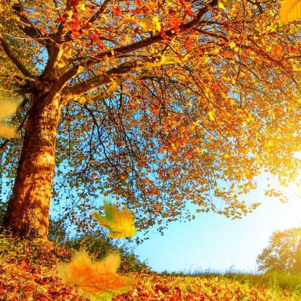 Auf Sturm folgt Sonne! Kommt endlich der goldene Herbst? (Foto)