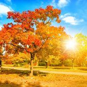 "27 Grad im Oktober! Hoch ""Ulf"" bringt den Sommer zurück (Foto)"