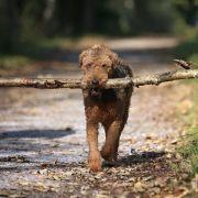 Flugblatt-Aufruf! 1000 Euro für Tötung eines Hundes (Foto)