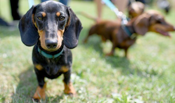 Hunde-Attacke in Österreich