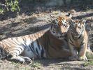Tragödie im Tierpark Köthen