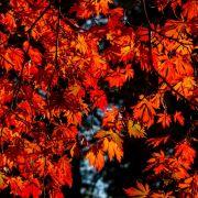 Temperatur-Rekord im Herbst! Wie lange bleibt der Sommer noch? (Foto)