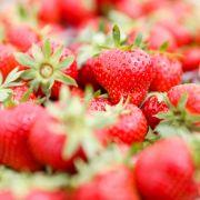 Vorsicht vor diesen Früchten! Hepatitis A in Erdbeeren entdeckt! (Foto)