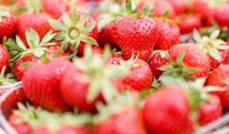 In Erdbeeren aus Polen wurde jüngst der Erregervirus Hepatitis A entdeckt. (Foto)