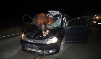 Ein Pferd ist bei einem Verkehrsunfall durch die Windschutzscheibe eines Autos gekracht und verendet. (Foto)