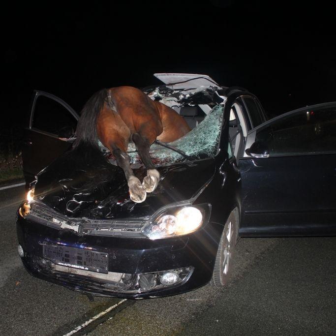 Irrer Crash! Pferd brettert durch Windschutzscheibe und stirbt (Foto)