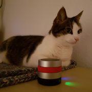 Katze Holly hat RelaxoPet aus