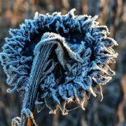 Wintereinbruch! HIER droht Frost und der 1. Schnee (Foto)