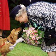 Todesdrama bei der Queen! Ihr letzter Corgi ist gestorben (Foto)