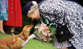 Queen Elizabeth II. mit einem ihrer Hunde. (Foto)