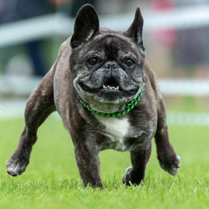 Unfassbar! Aggro-Hund beißt Herrchen die Genitalien ab (Foto)