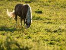 Brutale Pferde-Attacke in Weeze