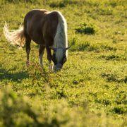 Pferdehasser schlitzt Tier den Hals auf (Foto)