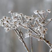 Bekommen wir in diesem Jahr endlich weiße Weihnachten? (Foto)