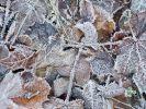 Frost könnte in Brandenburg und Bayern für Eisnebel sorgen. (Foto)