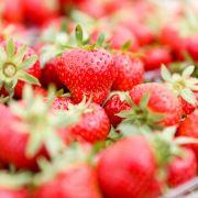 Frau (50) präpariert Erdbeeren mit Nadeln (Foto)