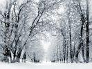 Gibt es weiße Weihnachten? (Foto)