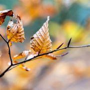Chaos-Winter mit Mini-Hitzewelle, Regen und Glatteis (Foto)