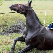 Pony nach sexuellem Missbrauch brutal getötet (Foto)