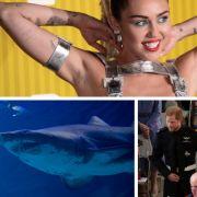 Sexy Busenshow für guten Zweck // Blutige Hai-Attacke // Prinz Harry rastet aus (Foto)