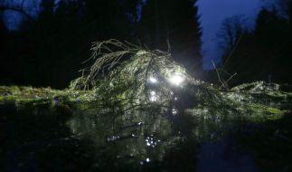Im Süden Deutschlands sorgten heftige Sturmböen am Wochenende vom 2. Advent für Verkehrsbehinderungen durch umgestürzte Bäume. (Foto)