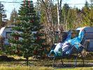 Oft gibt es in Deutschland grüne statt weiße Weihnachten. (Foto)