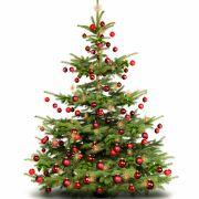 Mann stürzt von Weihnachtsbaum - tot! (Foto)