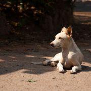 Männer vergewaltigen Hund und schleifen ihn zu Tode (Foto)
