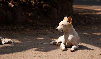 Zwei Männer haben in Indien einen Hund offenbar zu Tode gequält. (Foto)