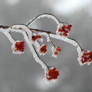 Frühling statt weiße Weihnachten? An Heiligabend droht der Hitze-Hammer (Foto)