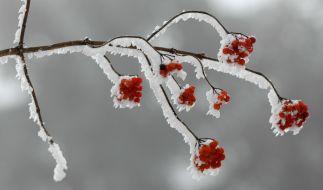 Die Chancen auf weiße Weihnachten 2018 schätzen Meteorologen in diesem Jahr skeptisch ein. (Foto)