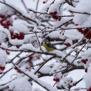 Stürmisch, kalt, glatt! So ungemütlich wird der Januar (Foto)