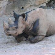 2-Jährige in Zoo von Nashorn attackiert (Foto)