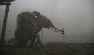 Ein wilder Elefant in Nepal hat eine Frau zu Tode getrampelt. (Foto)